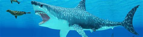 Still Alive megalodon shark still alive