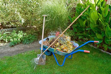 backyard cleanup yard clean up services spring fall lawn clean up