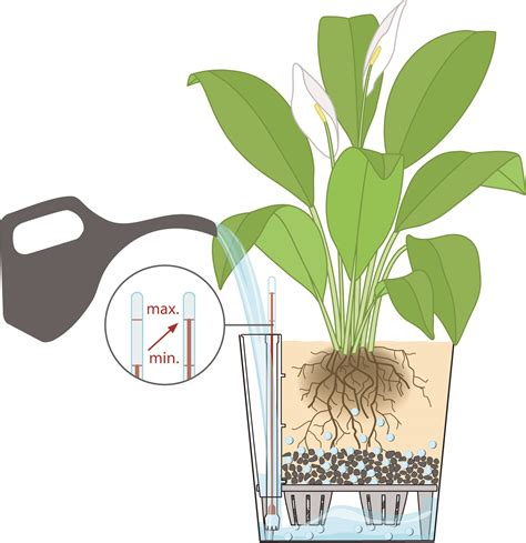 Sub Irrigated Planter System by Sub Irrigation System For Watering Tropical Plants