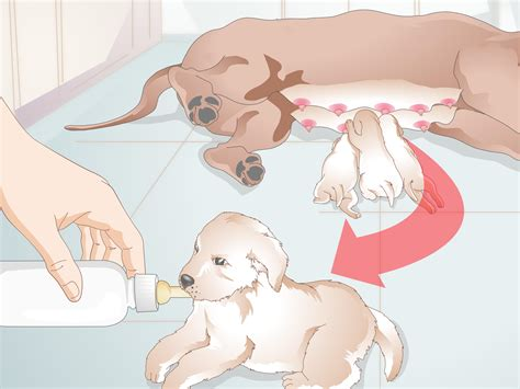 how to feed a newborn puppy how to feed newborn puppies 11 steps with pictures wikihow