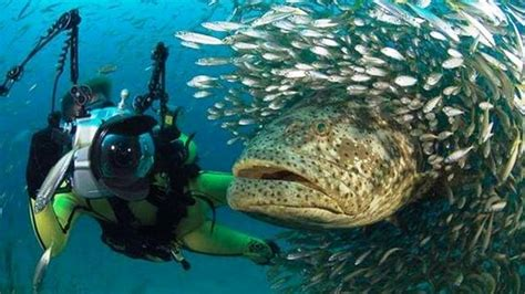 best place to dive best places to scuba dive who wants to travel