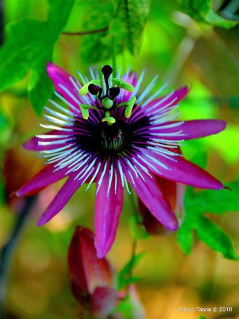 fiori mondo piante e fiori dal mondo trendynet