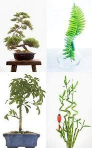 plants in bedroom feng shui 17 best images about feng shui on pinterest