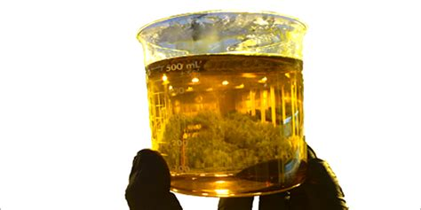 Vaccum Distillation Watch Out Dabbers 2 Watch Out Dabbers Potent Cannabis
