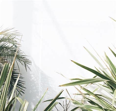 minimalist plants minimalist plants