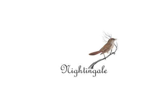 nightingale tattoo nightingale by crazychic007 on deviantart