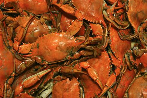 recipe  boiling crabs