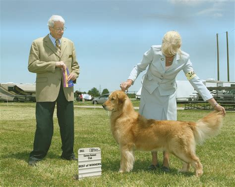 retired golden retriever service dogs for adoption bryeridge goldens retrievers