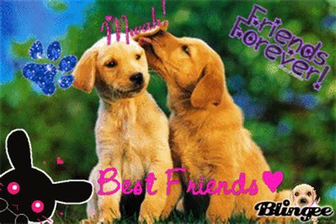 best friend puppies best friends puppies picture 72139035 blingee