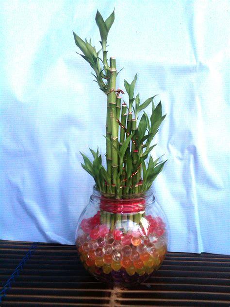 foto koleksi tanaman hidrogel tanaman  media hidrogel
