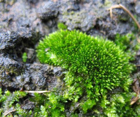 using georgia native plants marvelous moss