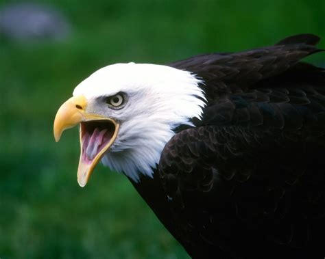 Amazing Animals Angry Pictures Worlds Most Amazing Animals Wallpapers