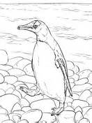 penguin habitat coloring page penguins coloring pages free coloring pages