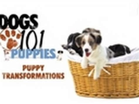 dogs 101 puppies dogs 101 puppy transformations puppies