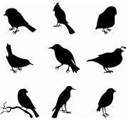 Bird Free Vector Download 2547 For