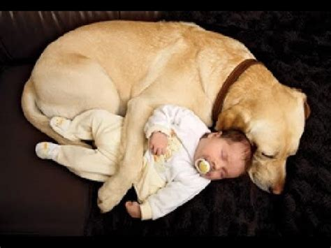 puppies with babies best of cats and dogs protecting babies compilation 2014 new