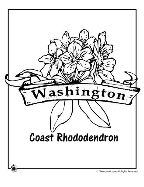 washington coloring pages state flower coloring pages washington state flower