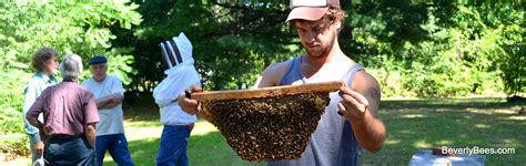 harvesting honey from a top bar hive top bar hive honey harvest with sam comfort beverly bees