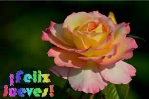 feliz jueves con rosas jpg banco de imagenes feliz jueves postales con flores y