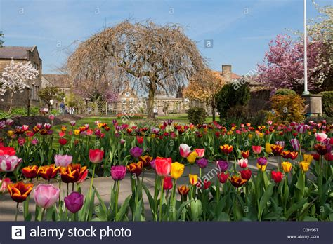 bathtub flower bed tulips in a flower bed in the bath gardens bakewell derbyshire peak stock photo
