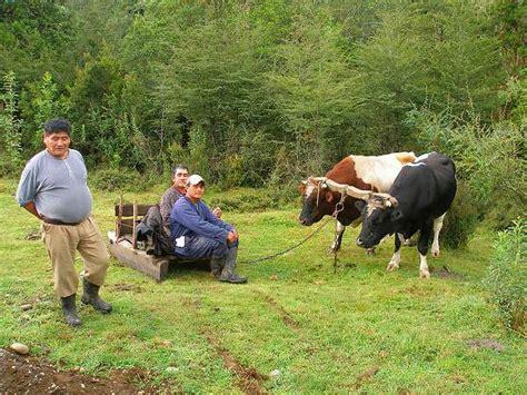 imagenes de la vida rural convocan a j 243 venes para un concurso fotogr 225 fico sobre la