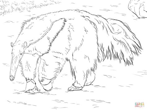 Anteater Coloring Page by Anteater Coloring Page Free Printable Coloring Pages