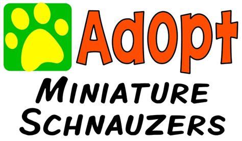 soul rottweiler rescue gypsysoul rottweiler rescue animalrescuedirectory net