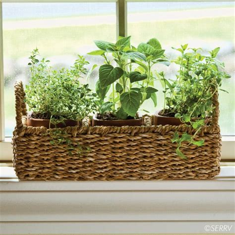 Window Sill Herb Garden Designs Windowsill Herb Planter Three Terracotta Pots Nest Within