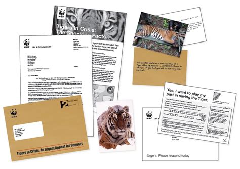 wwf charity letter sofii 183 wwf year of the tiger appeal 2009