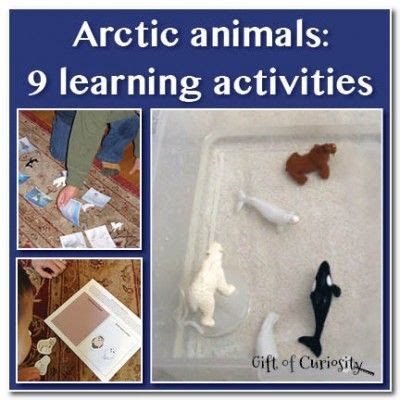 1000 Images About Arctic Animals - 1000 images about arctic animals on songs for
