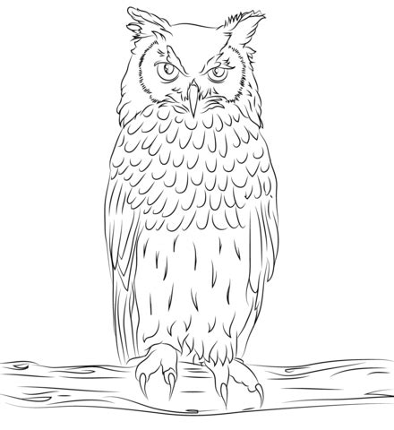 spotted owl coloring page bengalese eagle owl coloring page free printable