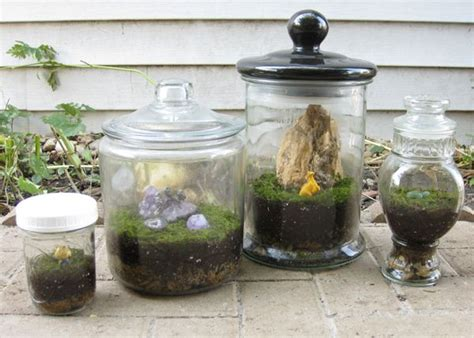 diy moss terrariums give your loved ones the gift of nature without