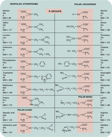 amino acid table science varia january 2013