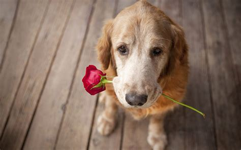 images of love dogs hd dogs wallpapers and photos hd animals wallpapers
