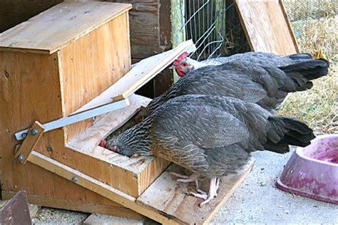 Ukuran Tempat Pakan Burung membuat tempat pakan otomatis untuk ayam dan unggas klub