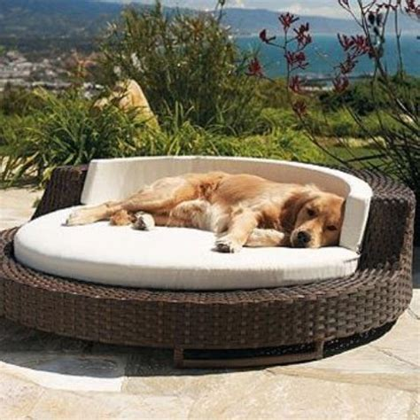 awesome dog beds  indoors  outdoors digsdigs