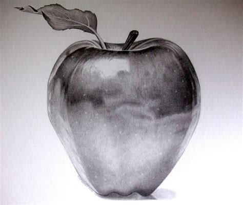 apple drawing drawn apple pencil sketch pencil and in color drawn