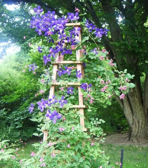 marvelous ideas    ladder   garden