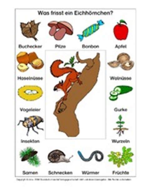 Eichhörnchen Im Winter 4283 by Tiere In Der Grundschule Eichh 195 182 Rnchen Werkstatt Tiere
