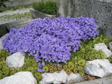 fiori per aiuole estive piante annuali come avere la fioritura a estate