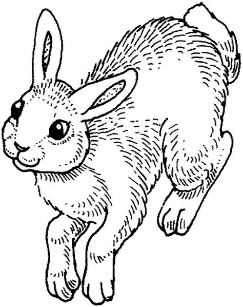 hopping bunny coloring page bunny coloring pages hopping coloringstar