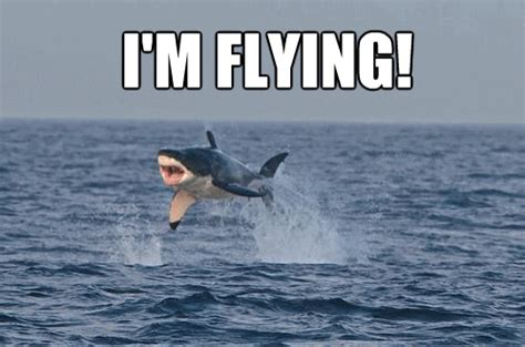 Funny Shark Memes - 20 funny shark pictures