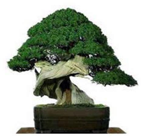 Tanaman Hias Artifisial Bonsai Bentuk Huruf Home 1 Set ragam tanaman hias