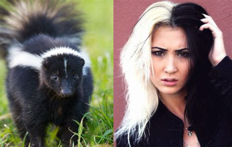 Skunk Hairstyle by Skunk Haircut Black And White Skunk Hair On