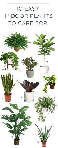 easy to care for indoor plants the beginner s guide to trendy indoor plants indoor