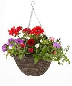 large cm hanging baskets     homebase