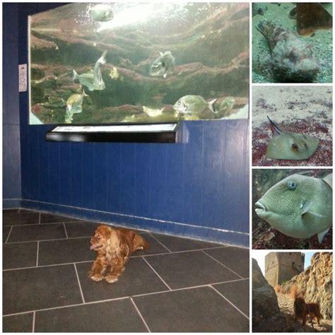 Lu Aquarium 2015 aquarium de porto plongez au sec lifestyle