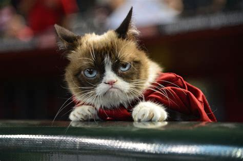 Tard The Cat Meme - why you ll love the tard the grumpy cat meme