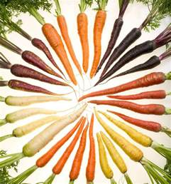 colors of carrots file carrots of many colors cutout jpg