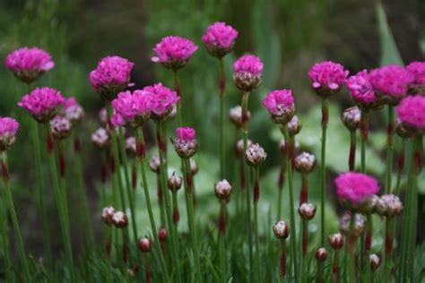 Vaste Planten Die Hele Zomer Bloeien by De 10 Mooiste Planten In Het Voorjaar In De Vinkentuin